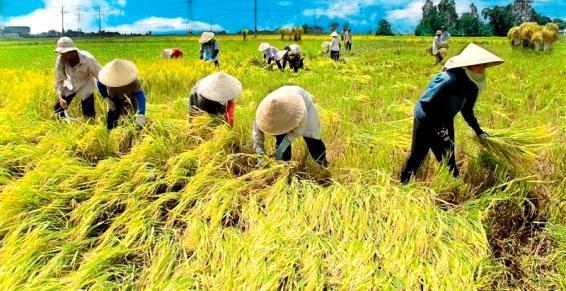 Mewujudkan Kedaulatan Pangan<BR>di Kabupaten Bojonegoro